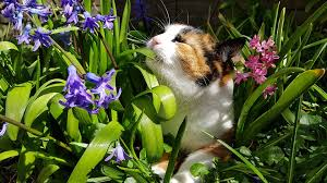 Les plantes et le chat